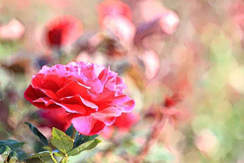 flower-4998-watercolour