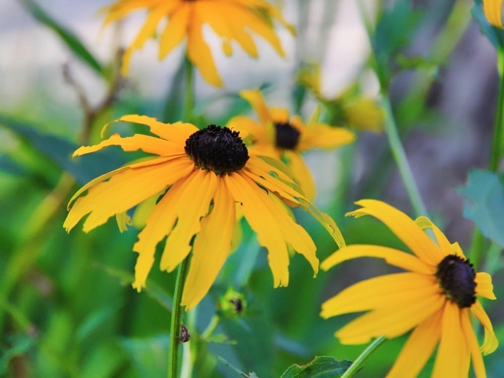 flower_0126-n-1k
