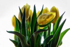 Tulips-0030-ns-1k