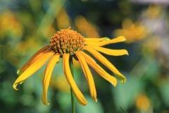 Yellow-flower_0114-2k-1sq-1