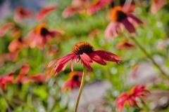 flower_9116-1k-lo