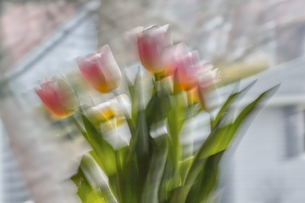 tulips-abstract_1891-1k-lo